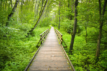 Wooden path in the forest or park