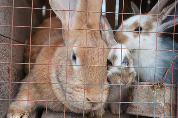 Close-up shot of rabbits sitting in a cage