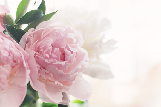 bouquet of delicate pink peonies in the early morning