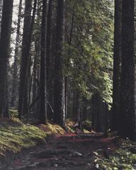 Hoh Rainforest Washington