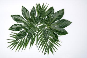 Schöne Palmen Blätter auf weißem Hintergrund für Produkt Prätention Banner Homepage Werbung