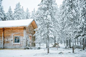 Reindeer in farm in Finland in Lapland in winter