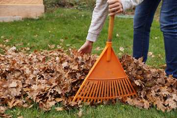 Hand-cleaning of leaves with hands and rakes. Autumn work in the garden.