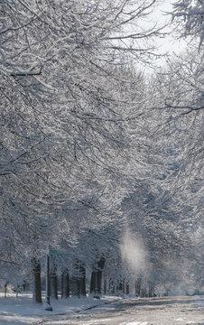 Snow falls from frosty trees along an empty street