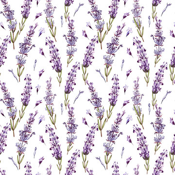 Watercolor pattern with Lavender. Hand painting. Watercolor.