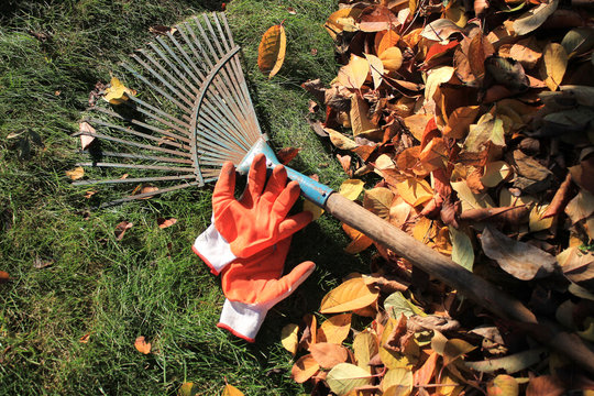 A fan rake and gloves lie on the grass next to fallen autumn leaves.