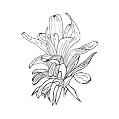 Vector hand drawn botanical illustration of abstract plant isolated on white background. Floral monochrome illustration in sketch style. Use for your design