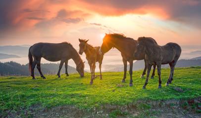 Horses in the sunlight