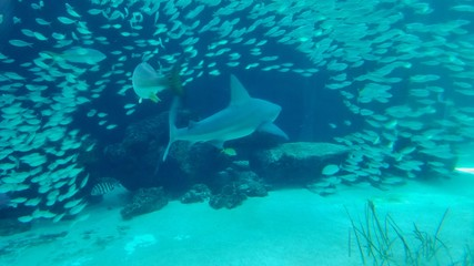 """Cool Shark Pic, Swimming Though a """"Tunnel"""" of  Smaller Fish in Deep Sea/Ocean Floor; Snorkeling, Scuba Diving, Adventure, Danger, Living on the Edge"""