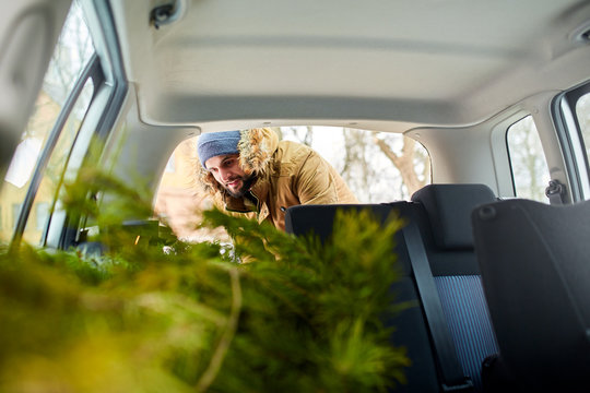 Bearded man loading christmas tree into the trunk of his car, inside view. Hipster puts fir tree into the back of his hatchback. Convertible auto interior with practical folding seats for boot space.