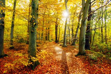 Sonnenlicht auf einer Lichtung im herbstlichen Mischwald, Waldbad als Meditation im goldenen Herbstwald