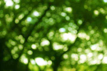 Green tree bokeh abstract light background
