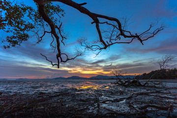 beautiful sunset at mangrove forest during the low tide no water in mangrove forest people can walk along the beach.