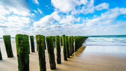 Wooden Posts of a beach erosion protection system along the beach at the town of Vlissingen in Zeeland Province in the Netherlands Wall mural