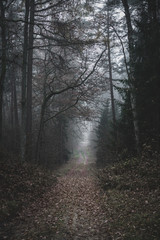 Moody, dark forest path covered with plenty of old leaves, mysterious trees. Autumn afternoon.