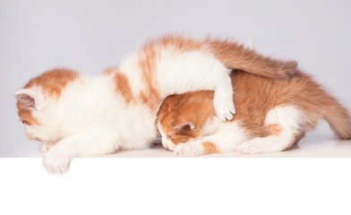 cute kitten in white background