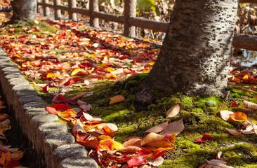 紅葉 コケの上の落ち葉と木