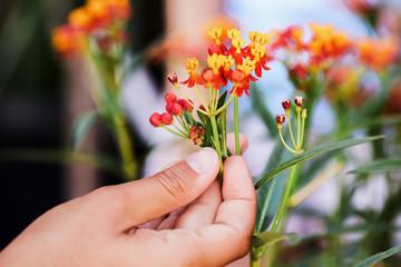 flower in female hands