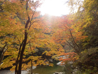 紅葉 広島県 三段峡