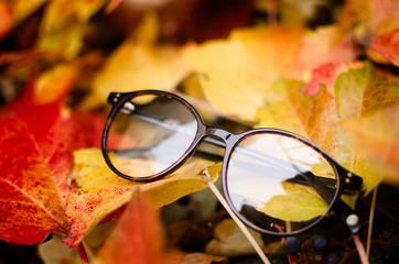 Rounded eyeglasses on autumn leaves