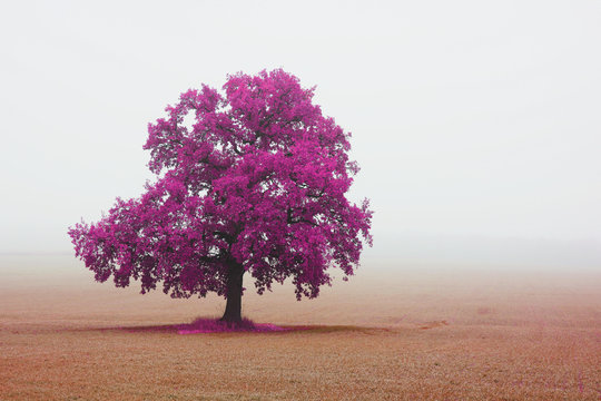 Beautiful abstract landscape with lone unusual tree amongst field in fall in fog