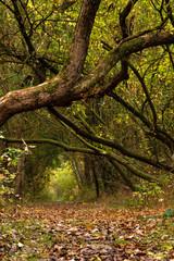 Idyllischer Waldweg mit Laub im Herbst