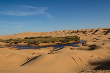 Oasis enabling green vegetation in the desert Sahara in Tunisia