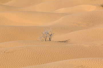 Dead branches of a bush in the solitude of the Sahara desert in Tunisia
