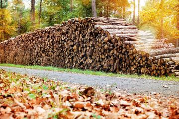 tas de bois coupé