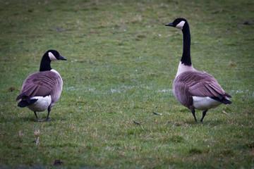 Canada Goose Partners