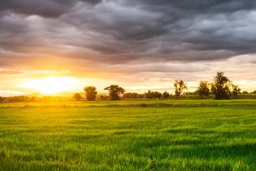 Beautiful rice field at sunset