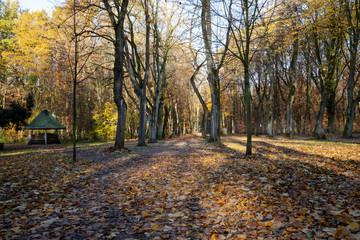 Baumallee an den Stadtteichen in Bottrop im Herbst