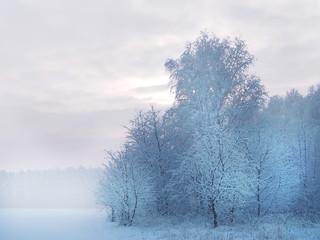Piękny biały zimowy krajobraz