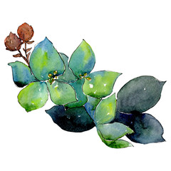 Gren blue botanical flower. Isolated bouquet illustration element. Green leaf. Watercolor background set.