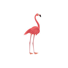 Vector illustration. Cartoon style icon of flamingo. Cute character for different design.