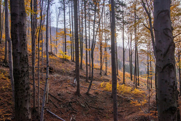 Autumn forest in the mountains.