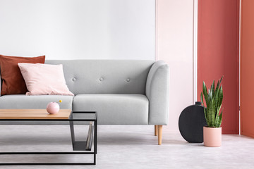 Plant next to grey couch with pink and red pillow in grey loft interior with table and screen. Real photo