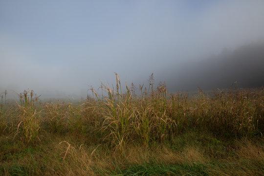 field of grass in fog