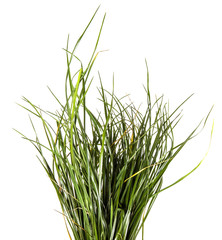 bunch of green grass. on a white background