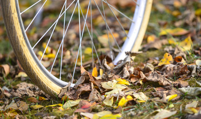 bike wheels, pneumatics on an autumn leaves