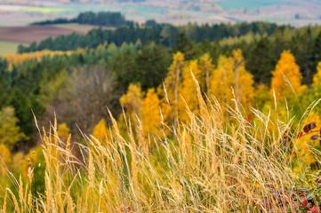 Fototapeta Oznaki jesieni obraz