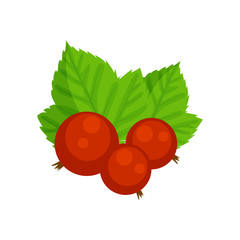 Red currant vector illustration isolated on white background. Gs