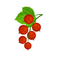 Red currant brunch vector illustration isolated on white backgro