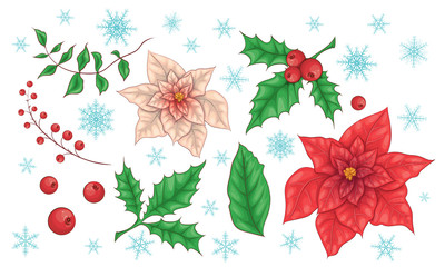 Poinsettia Flowers and Christmas Floral Elements. Vector