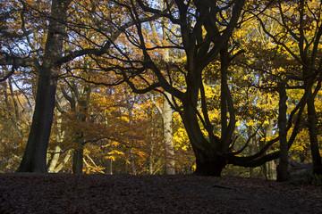 Autumn trees in sunshine