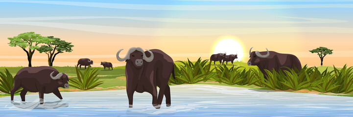A herd of African black buffalo at the watering hole. Grass, a large lake, and African acacia on the horizon. Realistic vector landscape. Nature and animals of Africa. Reserves and national parks.