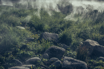 Morning fog descend on the mountain forest