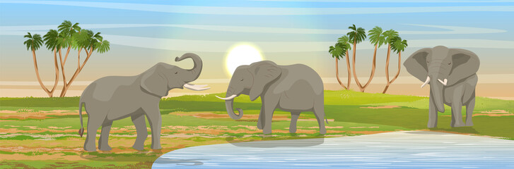 Family of African elephants at the watering hole. Grass, a small lake, the Doum palm on the horizon. Realistic vector landscape. Nature and animals of Africa. Reserves and national parks.