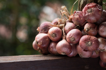 Closeup of shallot on wooden table on vintage kitchen