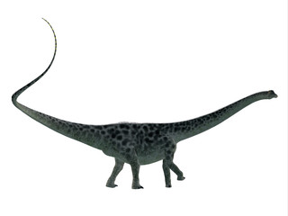Diplodocus Dinosaur Side Profile - Diplodocus was a sauropod herbivorous dinosaur that lived in North America during the Jurassic Period.